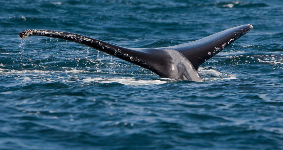 5 Amazing Facts You Didn't Know About Humpback Whales